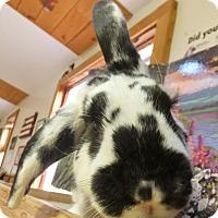 Adopt A Pet :: Cooper - Foster, RI