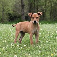 Adopt A Pet :: Zipp - Jefferson, TX