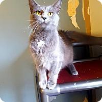 Adopt A Pet :: Rollo - Fairmont, WV