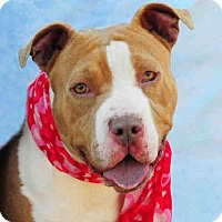 Adopt A Pet :: LADY IN RED - Louisville, KY