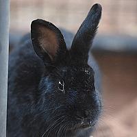 Adopt A Pet :: Roman - Kanab, UT