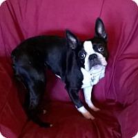 Adopt A Pet :: Mitzee - Campbell, CA