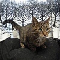 Adopt A Pet :: Marple - South Haven, MI