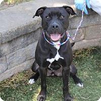 Adopt A Pet :: Edgar - Greensboro, NC