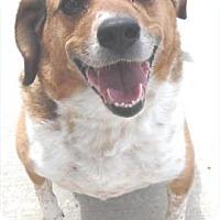 Adopt A Pet :: Casey - Waupaca, WI