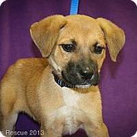 Adopt A Pet :: Beaker - Broomfield, CO