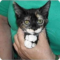 Adopt A Pet :: April - Riverside, RI