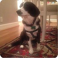 Adopt A Pet :: Emma - Alexandria, VA