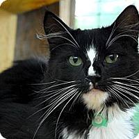 Adopt A Pet :: Squeaky - Lunenburg, MA