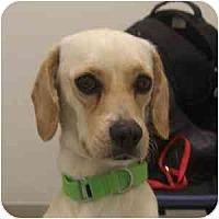Adopt A Pet :: Davy - Phoenix, AZ