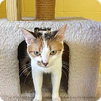 Adopt A Pet :: Tammy - Lake Charles, LA