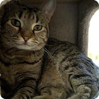 Adopt A Pet :: Shirley - Lake Charles, LA