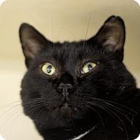 Adopt A Pet :: Benedict - Chicago, IL