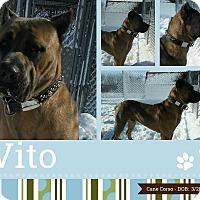Adopt A Pet :: Vito - Clear Lake, IA