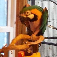 Adopt A Pet :: Millie - Blairstown, NJ