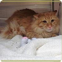 Adopt A Pet :: YELLER - Marietta, GA