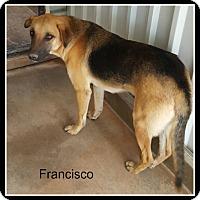 Adopt A Pet :: Francisco - Tombstone, AZ
