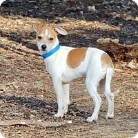 Adopt A Pet :: Tot (VA) - Virginia Beach, VA