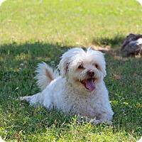 Adopt A Pet :: Milo - Savannah, TN