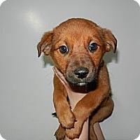 Adopt A Pet :: Sunny - South Jersey, NJ
