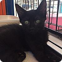 Adopt A Pet :: John Doe - Santa Monica, CA