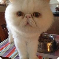 Adopt A Pet :: Alfie - Beverly Hills, CA