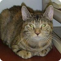 Adopt A Pet :: Truffle - Hamburg, NY