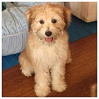 Adopt A Pet :: Cassie - West LA, CA