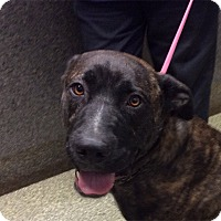 Adopt A Pet :: I1264683 is at Inland Valley - Beverly Hills, CA