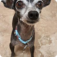 Adopt A Pet :: Ernie - Scottsdale, AZ