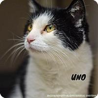 Adopt A Pet :: Uno - Hanna City, IL
