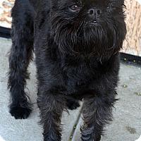 Adopt A Pet :: Bruce - Bridgeton, MO