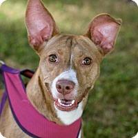 Adopt A Pet :: Missy - Huntsville, AL