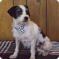 Adopt A Pet :: Thelma - Tavares, FL