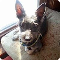 Adopt A Pet :: Pheobe - Framingham, MA
