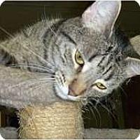 Adopt A Pet :: Macho - Hamburg, NY