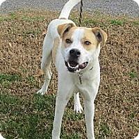 Adopt A Pet :: Simon - Foster Needed - kennebunkport, ME