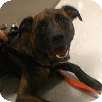 Adopt A Pet :: Huckleberry - Phoenix, AZ