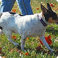 Adopt A Pet :: Lucy - Boise, ID