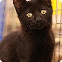 Adopt A Pet :: Tyson - Sacramento, CA