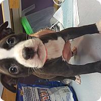 Adopt A Pet :: Kona - Scottsdale, AZ