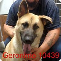 Adopt A Pet :: Geronimo - Greencastle, NC