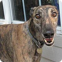 Adopt A Pet :: Goodwill - Canadensis, PA
