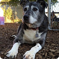Adopt A Pet :: SOPHIE - Brunswick, ME