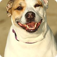 Adopt A Pet :: Oakey - Lafayette, IN