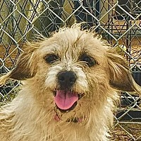 Adopt A Pet :: Priscilla - Lancaster, CA