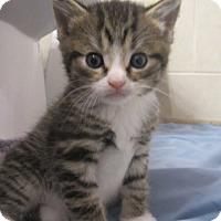 Adopt A Pet :: Plum - Youngsville, NC