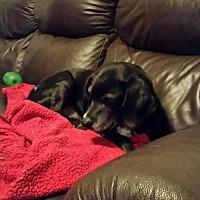 Adopt A Pet :: Annie - Codorus, PA