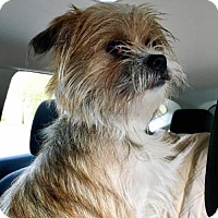 Adopt A Pet :: Cisco - Suwanee, GA