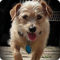 Adopt A Pet :: Toby - In Foster - Marrero, LA